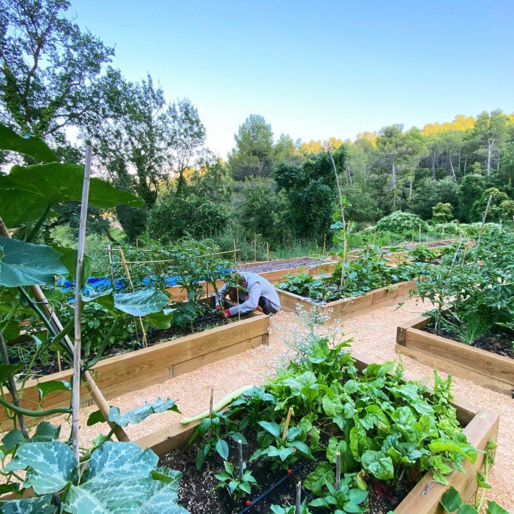 Garden-1-1-scaled